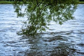flood on the river rhine