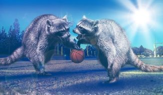 picture of raccoons with a basketball