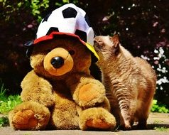 cat and the bear European Championship Football