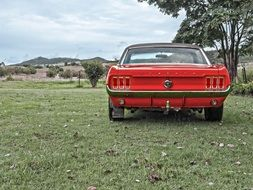red mustang stands on green grass