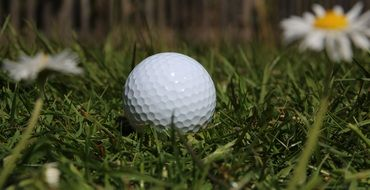 Golf Ball and Daisies flower