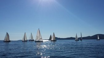 sailing boats on a sunny day