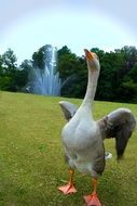 goose on a green field on the background of the fountain