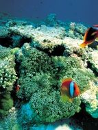 corals of a underwater world
