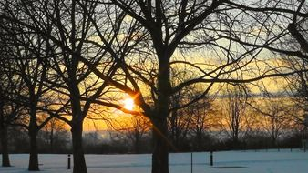 sunrise behind the trees in the park