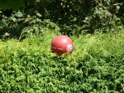red Ball Football