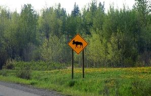Moose Road Sign on a road