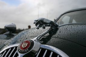Vintage Jaguar Car logo