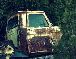 rusty abandoned truck among green thickets