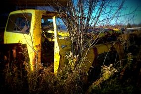 yellow rusty truck among the thickets