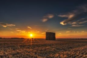sunset on the background of a field with wheat