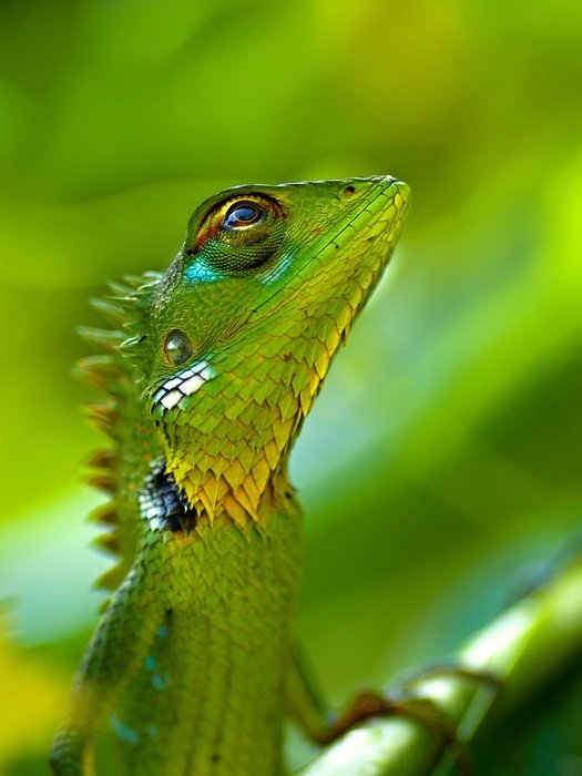 macro photo of green lizard in nature