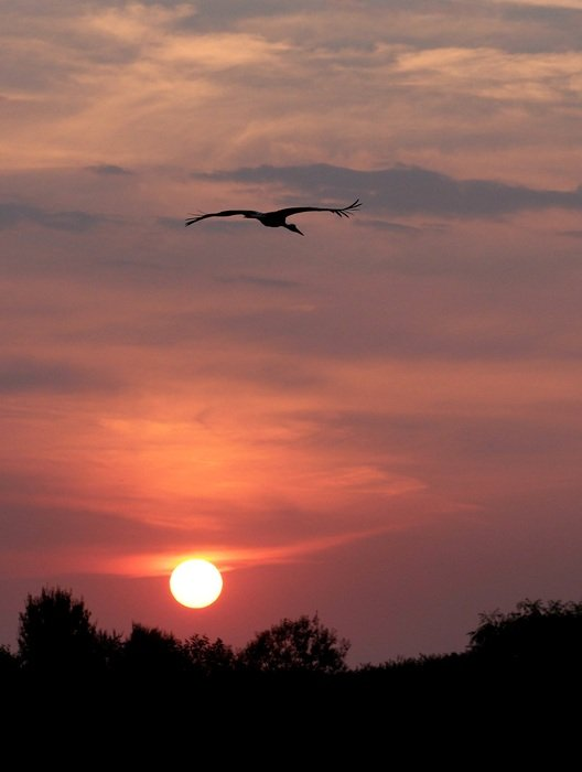 Sun Stork Sky Cloud Red