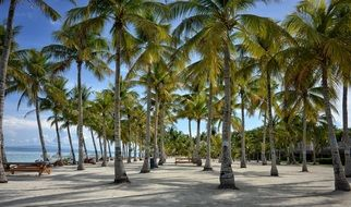 grove of Palm Trees at sea, Philippines, Bohol Resorts