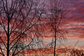 trees against the red evening sky