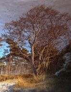 high-rise bare trees on coast of baltic sea at winter
