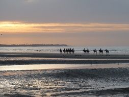Horses on the seaside under the sunset
