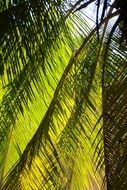 palm tree is an exotic plant