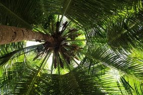 bottom view of a huge palm tree