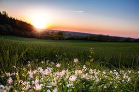 sunset on the flower meadow