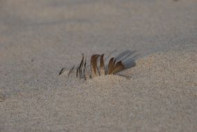 feather in the sand on the Baltic Sea