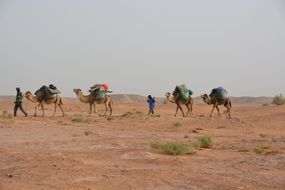 camel caravan with tourists in the desert