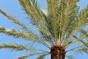 palm tree is a tropical tree