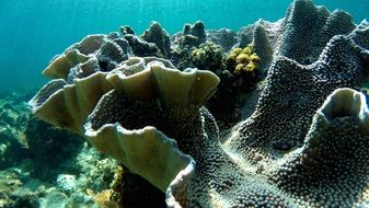 scenic colorful Corals underwater, maldives