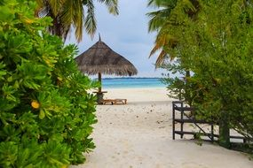 sandy beach on Tropical Island