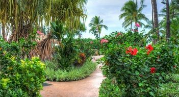 bright scenic vegetation in Hawaii