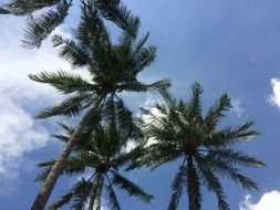 green palm trees under blue sky in summer