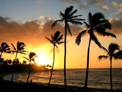 tropical palm trees on the beach in hawaii