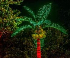 palm tree decoration in a botanical garden