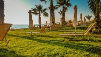 palm trees and sunbeds on a lawn by the sea
