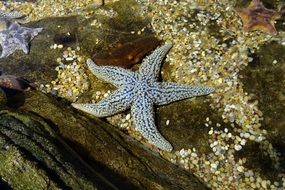 Picture of the Starfish in ocean