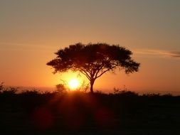 lonely African tree at sunset