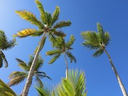 green palm trees under blue sky in dominican republic