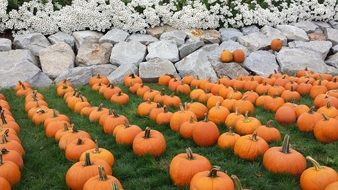 Pumpkins near the stones in fall