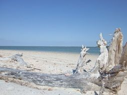 Picture of Driftwood on a sand beach
