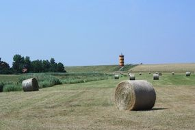 straw bales on a field in summer