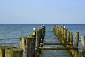 old wooden piles in the Baltic sea