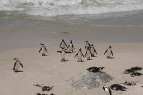 Penguins Bolders Beach Beach