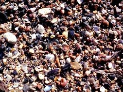 Seashells Beach