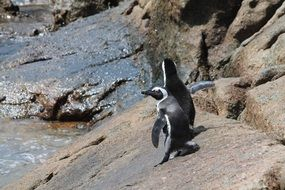 Penguins,South Africa
