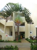 Pictures of palm tree in front of hotels in Samana, Dominican Republic