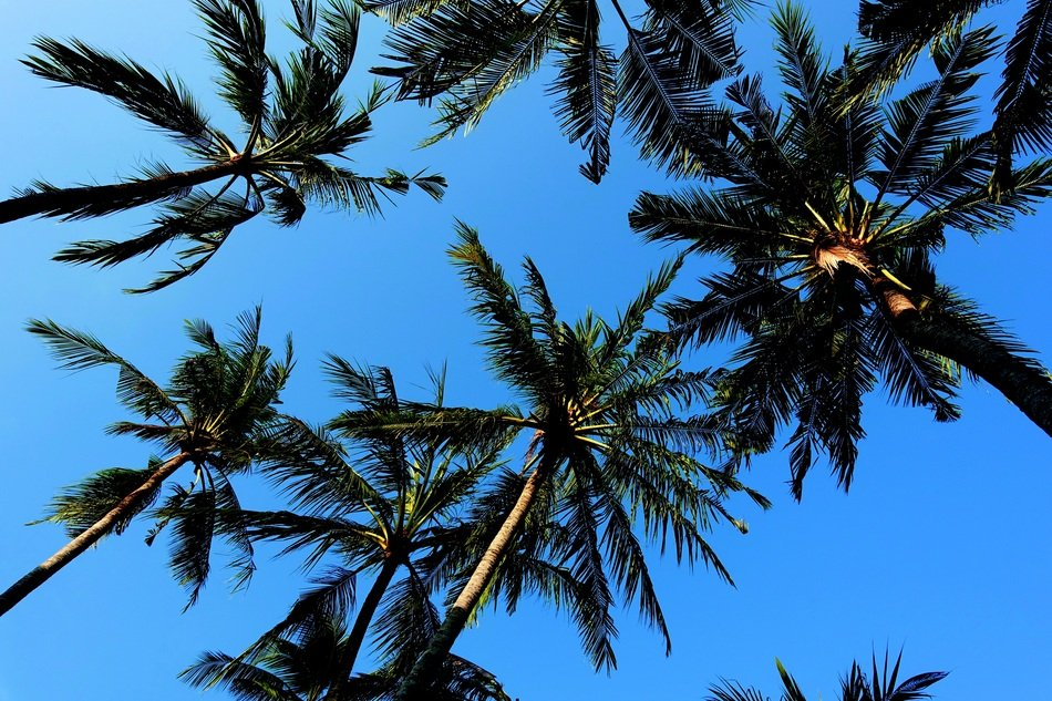 blue clear sky over green palm trees