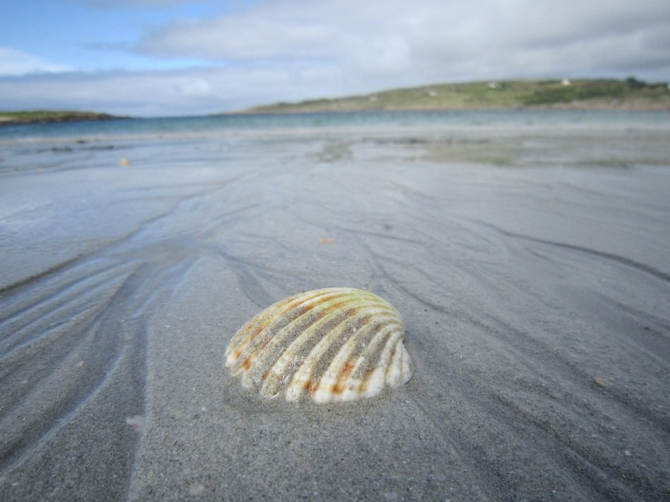 Closeup Picture of Shell on a Sand Beach