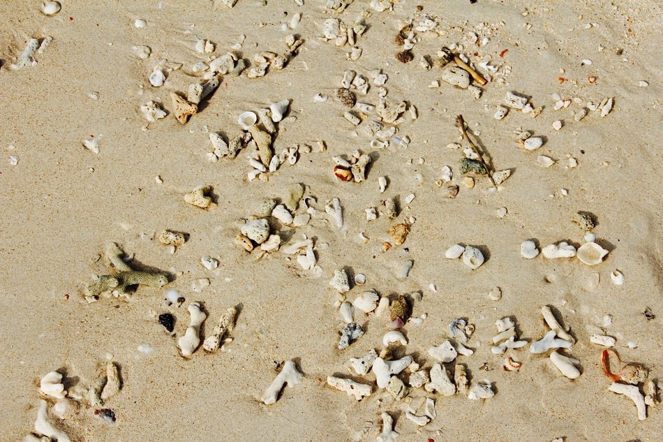 mussel shells on a sandy beach