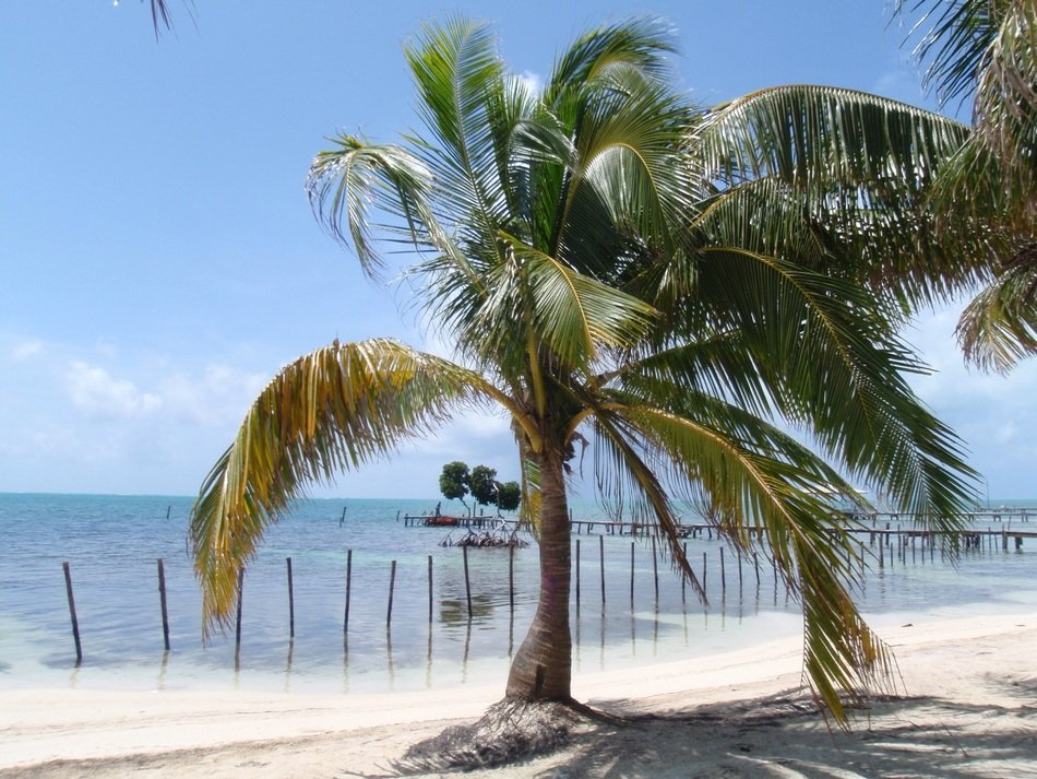 photo of coconut palm tree on a tropical beach