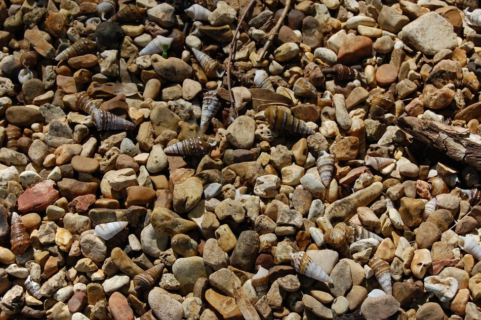 Pebbles and Shells on a beach